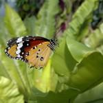 Foto scattata con Nokia N8