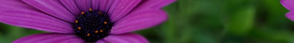 Fiore di Fezvrasta