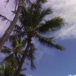 Immagine di prova Nokia N70