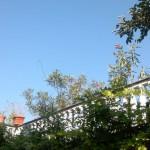 Foto scattata con il Nokia 701