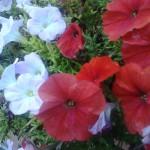 Foto scattata con Nokia Asha 501