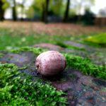 Foto scattata con Nokia 7.2