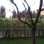 Foto scattata con Nokia 6300 4G