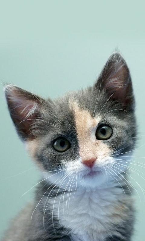 cat[1]
