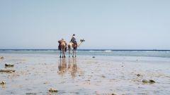 Dromedari in spiaggia