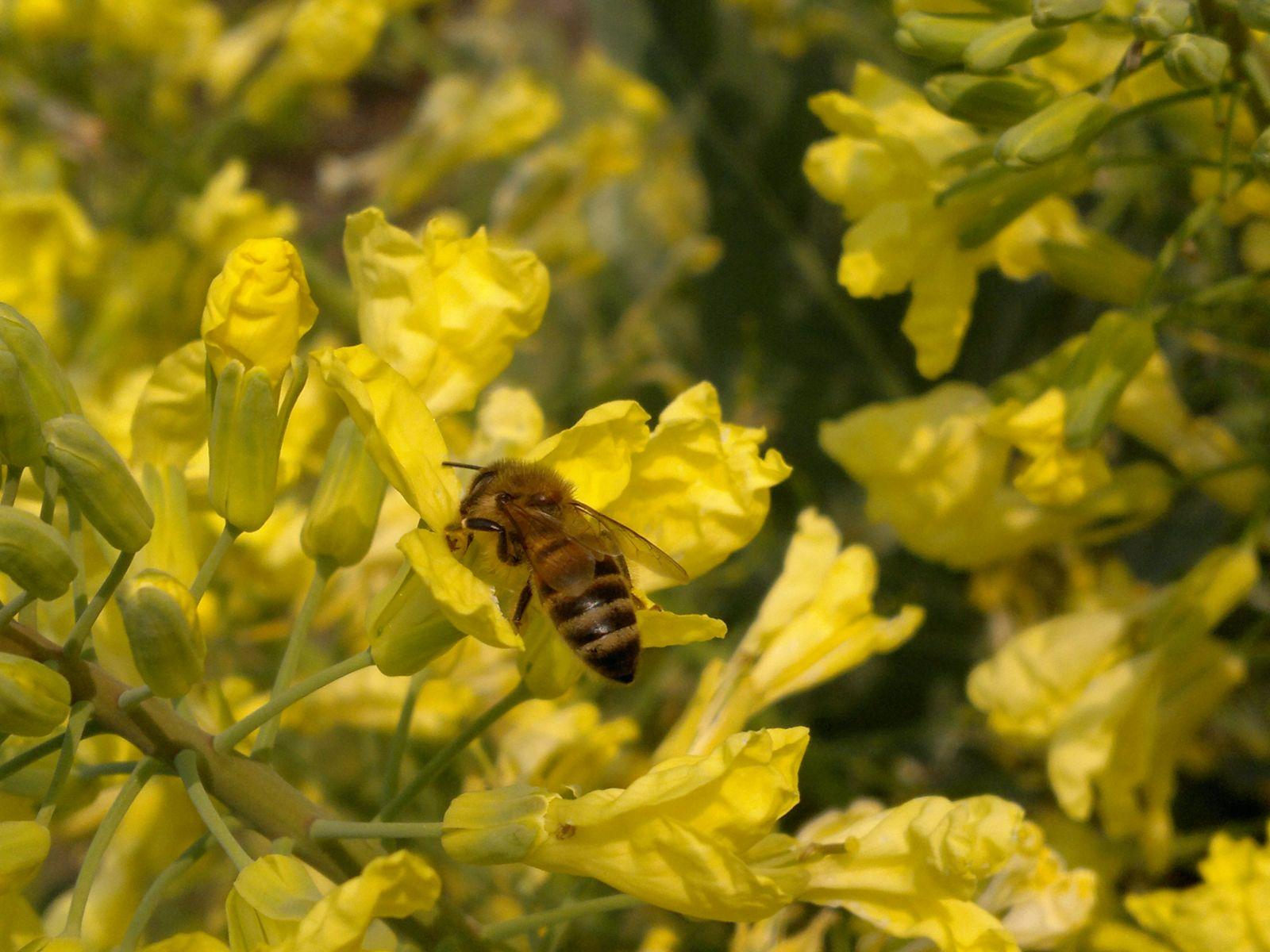 Primo piano ape