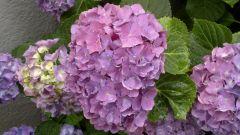 un po di fiori