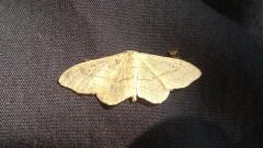 2012 06 29  farfalla  macro